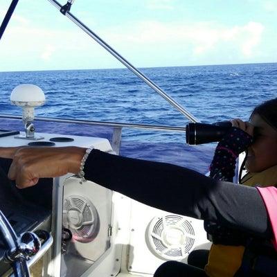 ホエールウォッチング開始❗沖縄で粋な海遊び・シーワークス沖縄アイランドの記事に添付されている画像