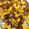キャラメルナッツの画像