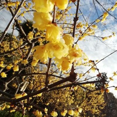 日本の美しさは想いが込められているからの記事に添付されている画像