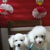 ★【数量限定】お洋服いっぱい福袋★送料無料♪小型犬サイズの画像