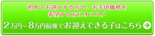 初めてお迎えする方や、お手頃価格を希望する方にオススメ 2万円〜8万円前後でお迎えできる子はこちら