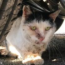 地域のさくら猫〜抜歯しました〜の記事に添付されている画像