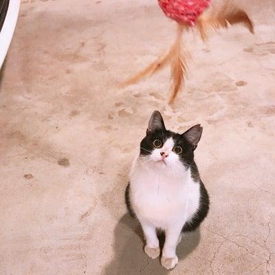 下町のトランプ猫達の家猫作戦3の記事に添付されている画像