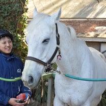 競馬から乗馬へ‼引退馬が大活躍の競技会が明日開催&CM撮影協力ですごい映像が‼の記事に添付されている画像