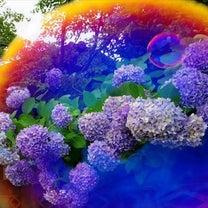 自宅近くの紫陽花2015.07.01の記事に添付されている画像
