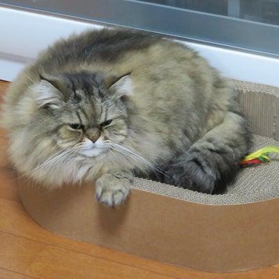 猫事情の記事に添付されている画像