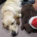 #犬用ベッドの画像