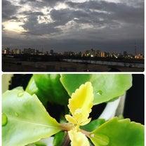 曇り空☁️の記事に添付されている画像