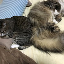 猫団子と認めてくださいの記事に添付されている画像