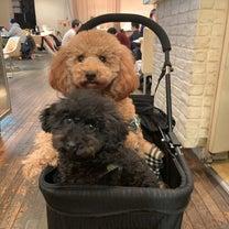 ワンちゃんと一緒にランチが出来る代官山の店の記事に添付されている画像