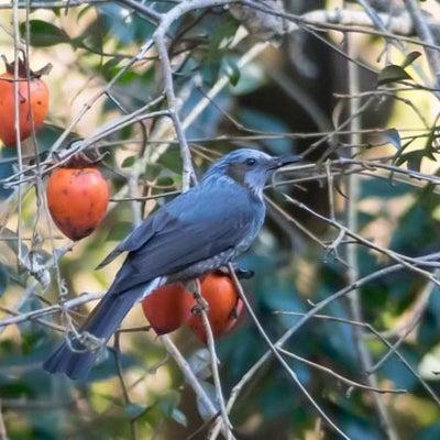 鳥が少ない・・・・・・の記事に添付されている画像