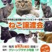 譲渡会のお知らせと参加猫紹介①