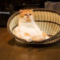 穏やかに肥えるの記事に添付されている画像