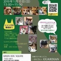 明日は神戸で譲渡会の記事に添付されている画像