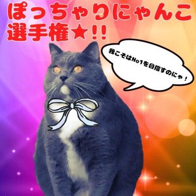 第2回ぽっちゃりにゃんこ選手権開催★!!の記事に添付されている画像