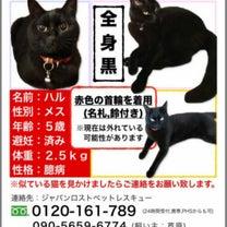 """""""大阪府 枚方市方面の捜索をしました。""""の記事に添付されている画像"""