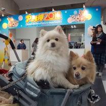 ペット博2019 in パシフィコ横浜の記事に添付されている画像