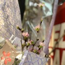 早咲きの桜が出回り始めました!春を感じてワクワク気分の記事に添付されている画像