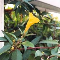 ゾンビツリー季節間違えて花が咲く、の巻の記事に添付されている画像