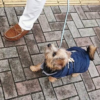 お散歩レッスン(^-^)vの記事に添付されている画像
