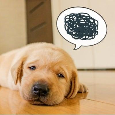 【それって、冬特有ストレス性うつかも!】の記事に添付されている画像