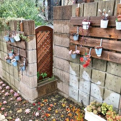 雨ざらしの花壇多肉。(^^)の記事に添付されている画像