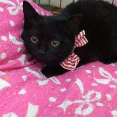 1月20日(日) にゃんクルー譲渡会に参加予定の猫さんたち-その1の記事に添付されている画像