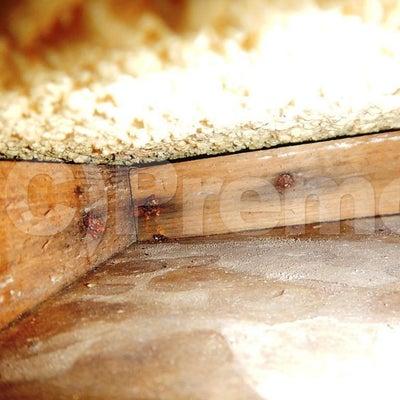 階上からの漏水事故後の防カビ工事の記事に添付されている画像