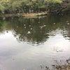 初詣に行ってきました。鴨編の画像