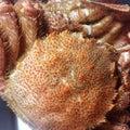 #生牡蠣の画像