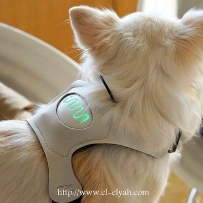 心臓を見れば心は見える♡〚INUPAHTY(イヌパシー)〛病気の早期発見をサポーの記事に添付されている画像