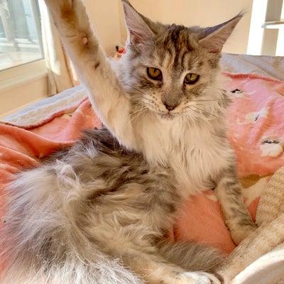 子猫のハイテンション、いつまで続く?の記事に添付されている画像