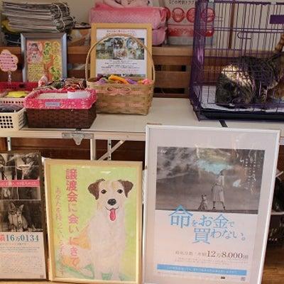 タバサのお家譲渡会&1/13のお客様&飼育放棄犬♪の記事に添付されている画像
