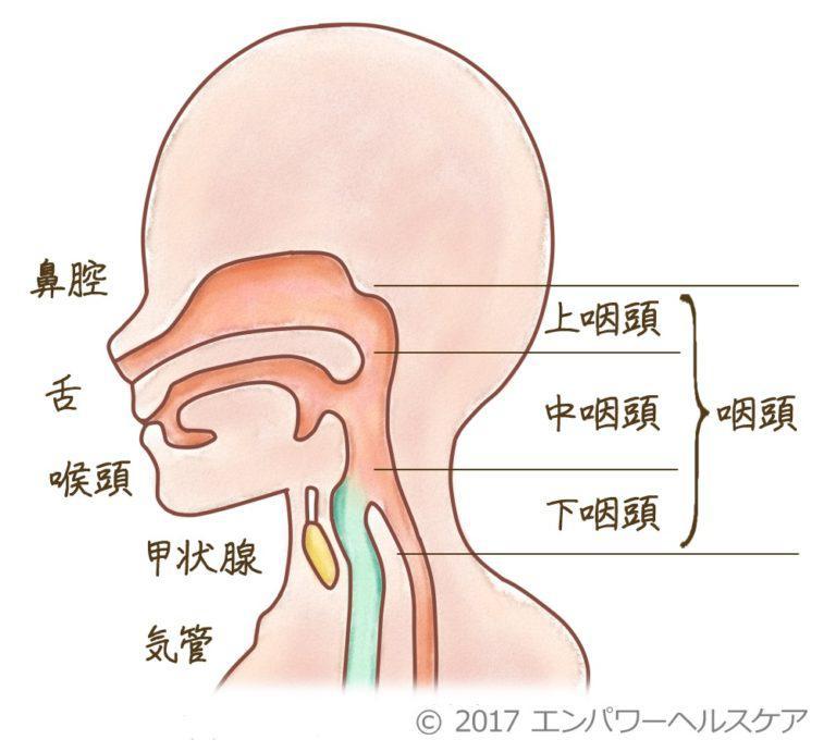 咽頭 炎 上 慢性