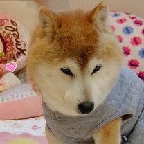 お洋服の楽しみ☆の記事に添付されている画像