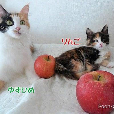 りんごとリンゴ みかんとミカン~~~♪の記事に添付されている画像