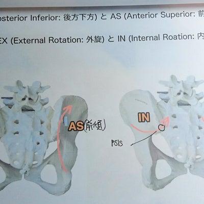 【骨盤矯正×PNFストレッチ講習でレベルUP】の記事に添付されている画像