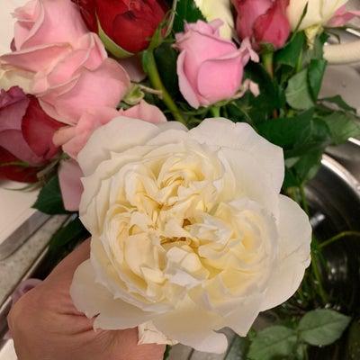 薔薇のお手入れの記事に添付されている画像