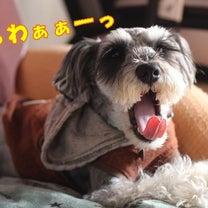ほっと…ひといきぃーっ…☆の記事に添付されている画像
