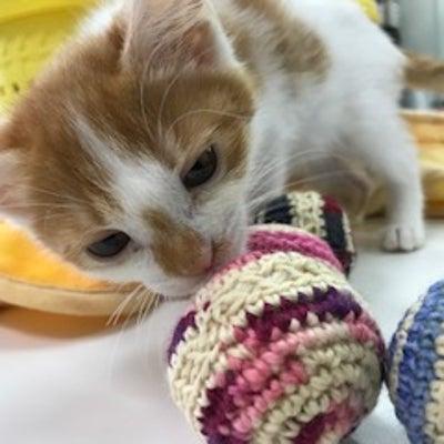 保護猫&保護犬 の記事に添付されている画像