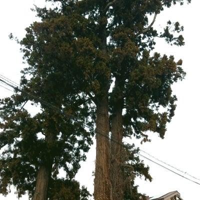 中仙道杉並木の記事に添付されている画像