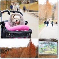 トーベ・ヤンソンあけぼの子どもの森公園の記事に添付されている画像