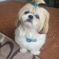 #愛犬家の画像