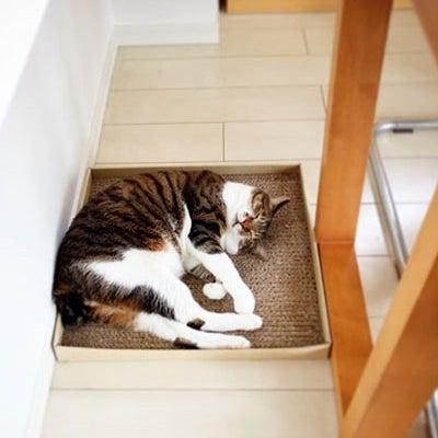 【猫4コマ】いいんだってば!!の記事に添付されている画像