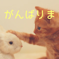#カウンセリングサービス月猫の画像