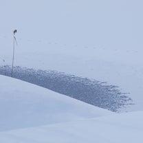 雪のない冬の記事に添付されている画像