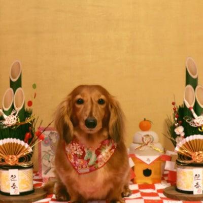 ♡ボンプチのトリミング・お店わんこ♡の記事に添付されている画像