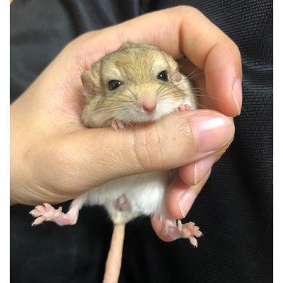 マカロニマウス販売((*´∀`*))の記事に添付されている画像