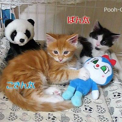 コキンちゃん&パンダさん~~~♪の記事に添付されている画像