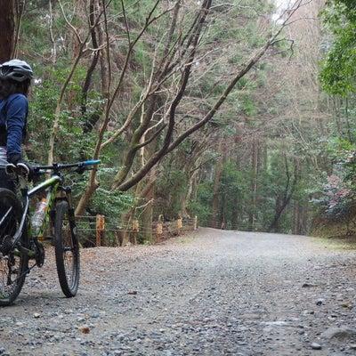 小さいサイズのグラベルバイクについて色々考察!の記事に添付されている画像